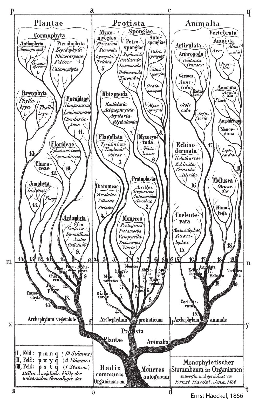 Homologies Phylogenies Sequence Space and the Theory of Evolution – Patterns of Evolution Worksheet