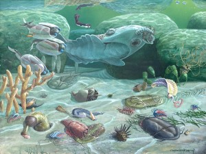 Cambrian animals 2