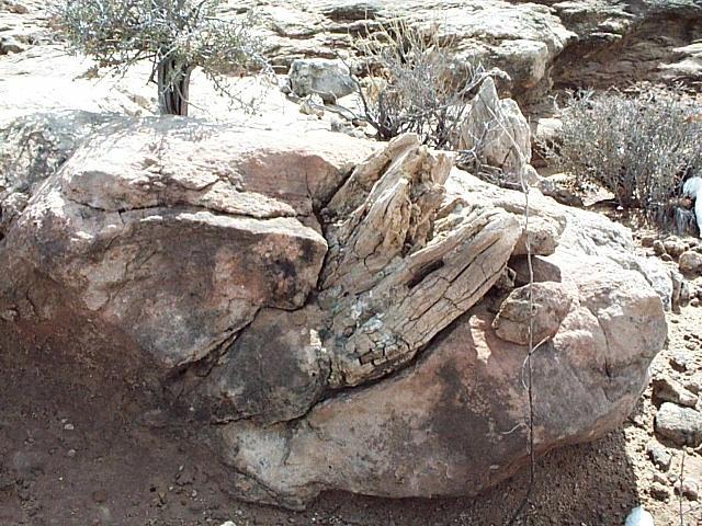 Navajo Trees