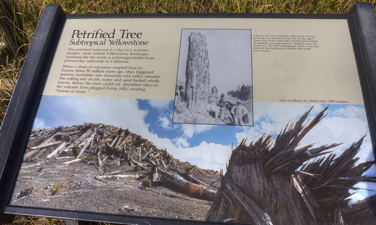 Sign at Specimen Ridge citing the catastrophic origin of the petrified trees